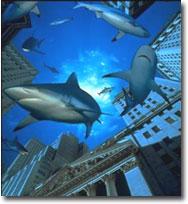 wall-street-sharks.jpg